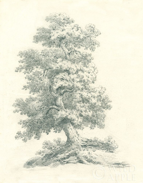 Tree Study II Poster Print by Wild Apple Portfolio Wild Apple Portfolio # 59694