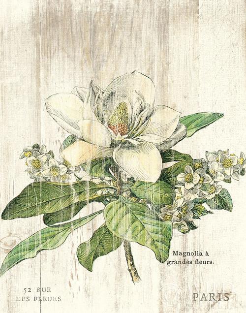 Magnolia de Printemps v2 Poster Print by Sue Schlabach # 58317