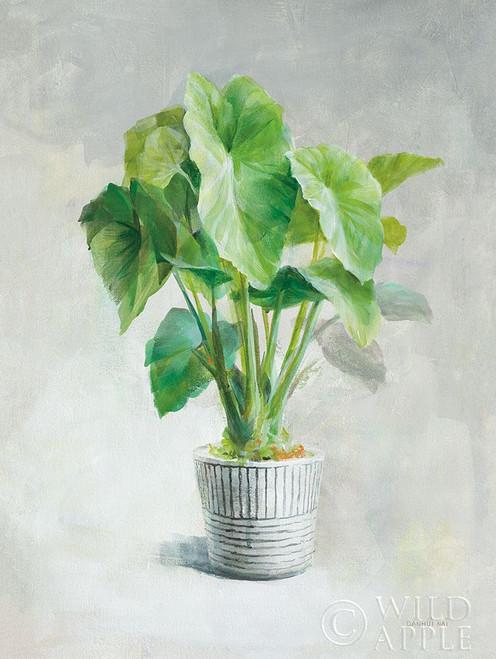 Greenhouse Palm I Poster Print by Danhui Nai # 57928