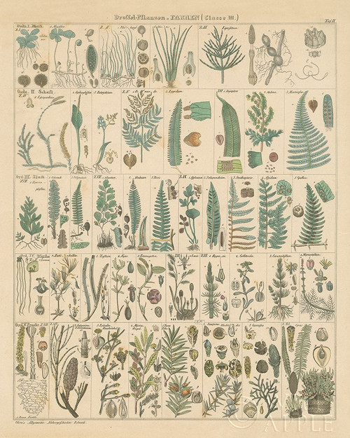 Fern Chart Poster Print by Wild Apple Portfolio Wild Apple Portfolio # 57997
