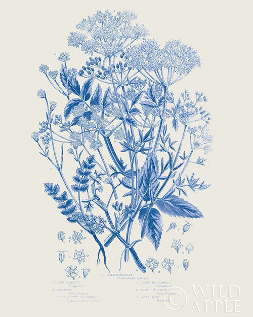 Flowering Plants I Mid Blue Poster Print by Wild Apple Portfolio Wild Apple Portfolio # 59242
