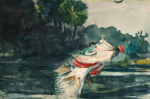 Life-Size Black Bass Poster Print by Winslow Homer # 56219