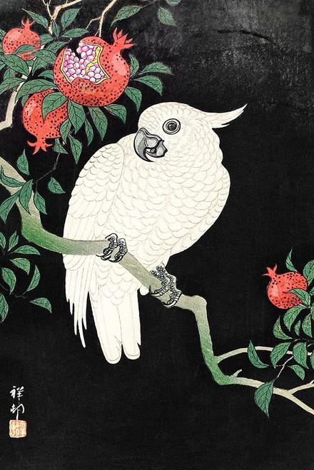 Cockatoo and Pomegranate Poster Print by Ohara Koson # 55333