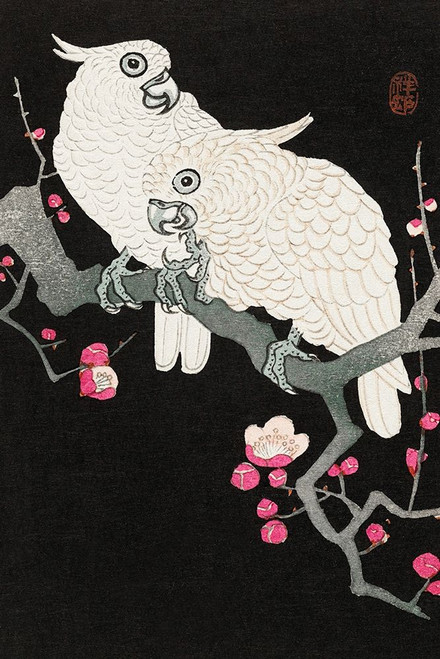 Two cockatoo and plum blossom Poster Print by Ohara Koson # 54973