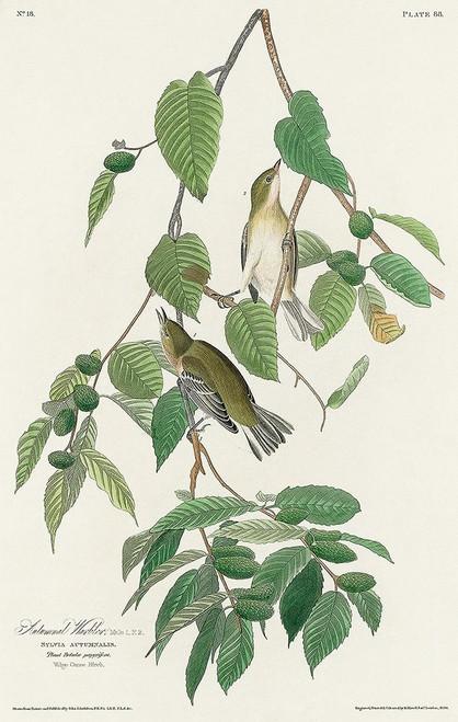 Autumnal Warbler Poster Print by John James Audubon # 53716