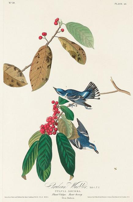 Azure Warbler Poster Print by John James Audubon # 53680