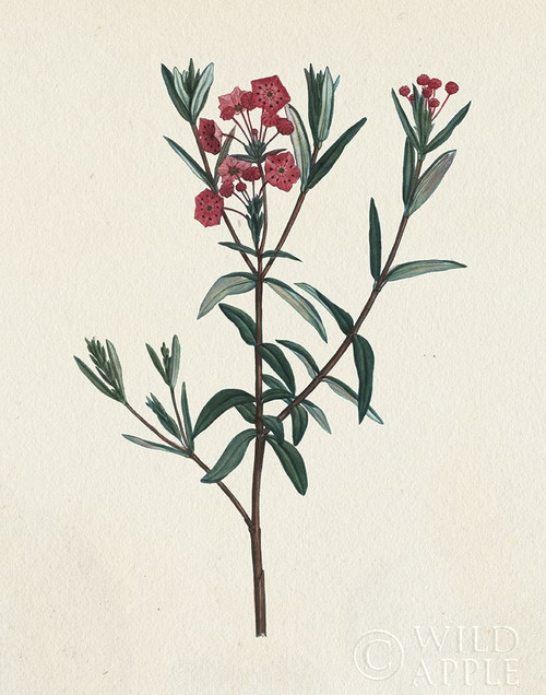 Victorian Garden Flowers II Poster Print by Wild Apple Portfolio Wild Apple Portfolio # 53194