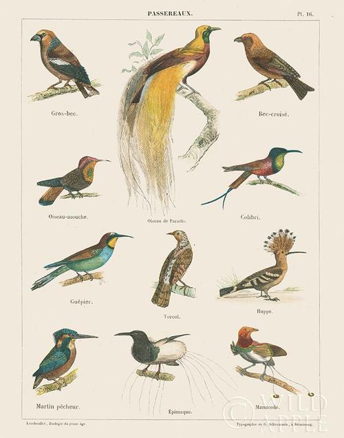 Bird Chart I Poster Print by Wild Apple Portfolio Wild Apple Portfolio # 52077