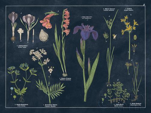 Botanical Floral Chart II Dark Blue Poster Print by Wild Apple Portfolio Wild Apple Portfolio # 52076