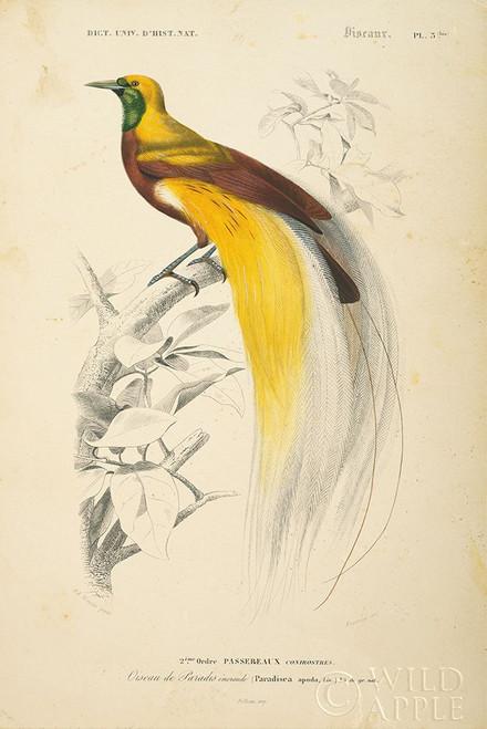 Oiseaux de Paradis Poster Print by Wild Apple Portfolio Wild Apple Portfolio # 52059