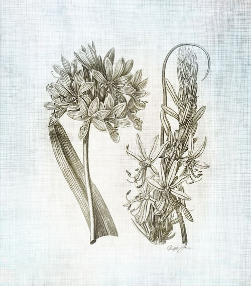 Farmhouse Botanical 1 Poster Print by Christopher James # 502JAM1314