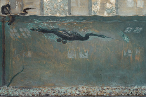 Diving Cormorant Poster Print by Otto H Bacher # 50304