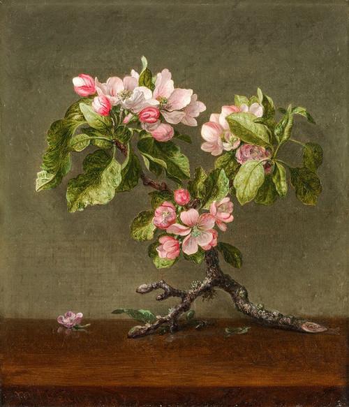 Apple Blossoms Poster Print by Martin Johnson Heade # 50195