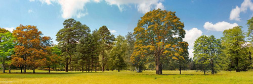 Trees in a Park Poster Print by  Pangea Images Pangea Images # 4AP5171