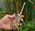 H2O 1820 PLUS w/ CoverUp Camo Remote Trainer