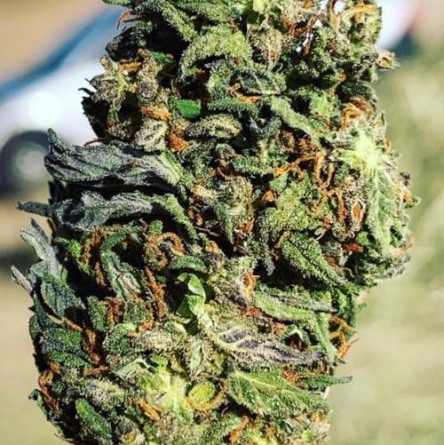 3 oz hemp sample pack