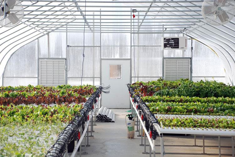 greenhouse-food.jpg
