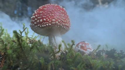 mushroom-fog.jpg