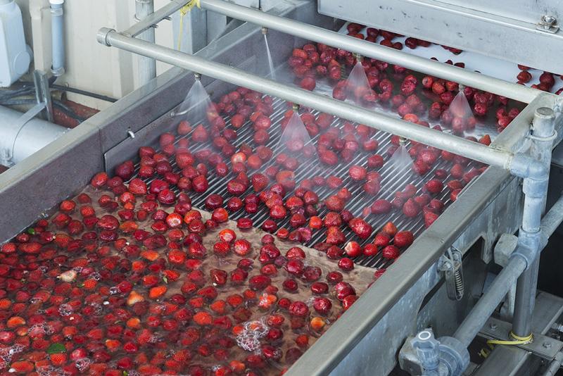 strawberry-processing.jpg