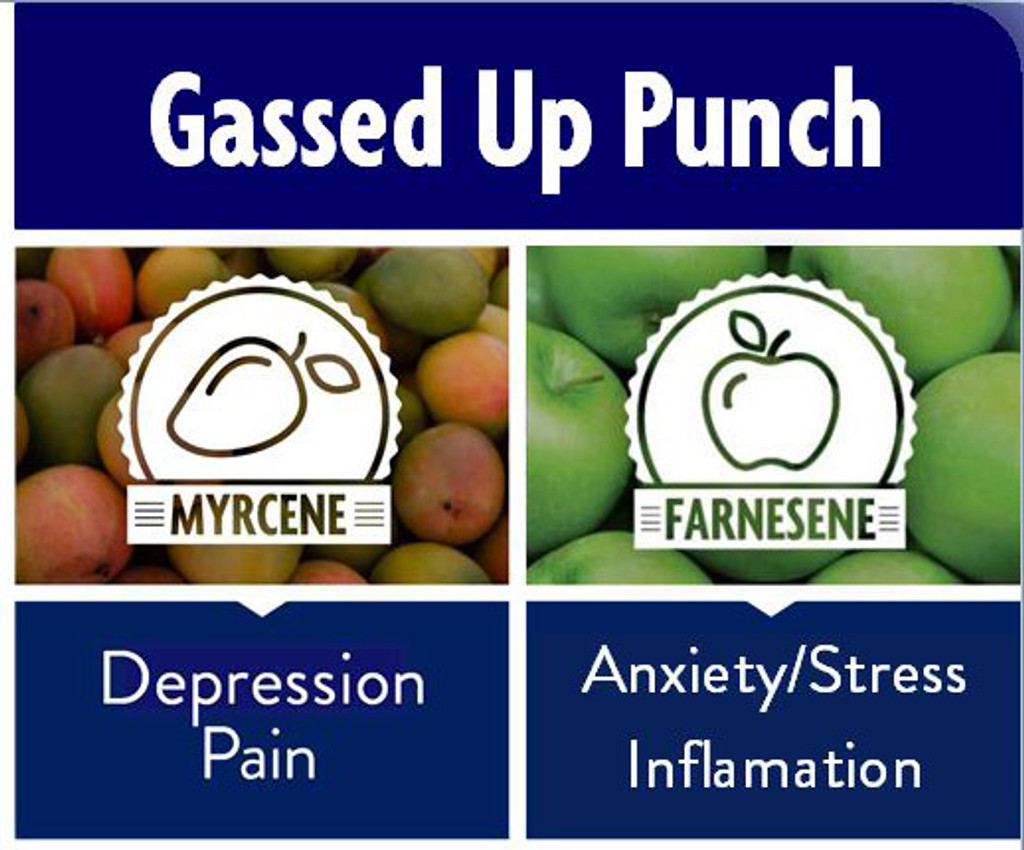 Gassed Up Punch (19% THC, 0.1% CBD)