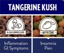 Tangerine Kush 23% THC, .1% CBD