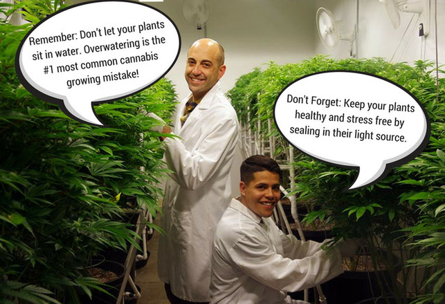 Growing Cannabis: Insight from Verdes' Experts