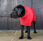 Dog Drying Coat Red