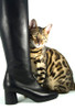 Cellina Black Tall Boots