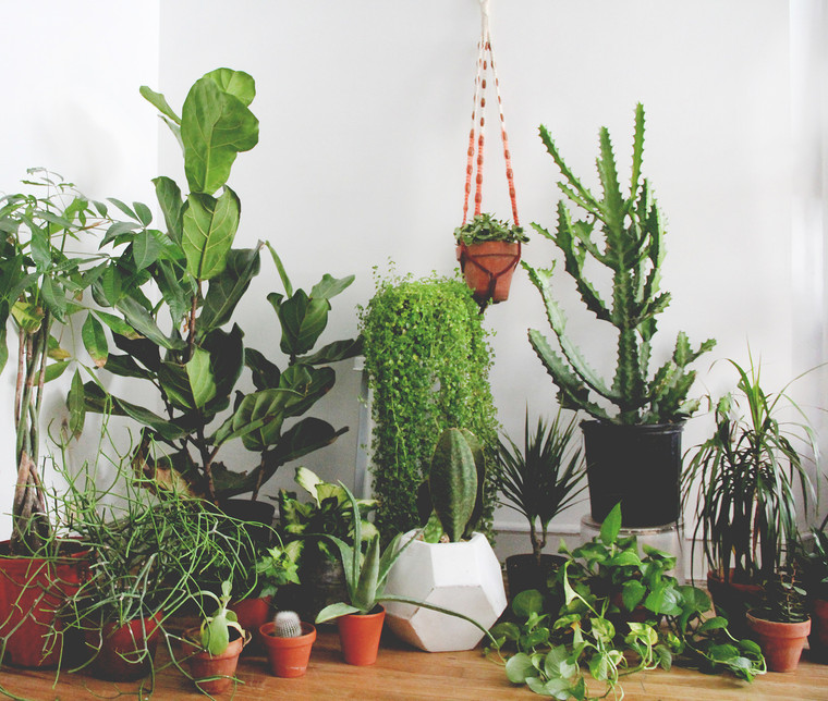 12 Month Houseplant Subscription