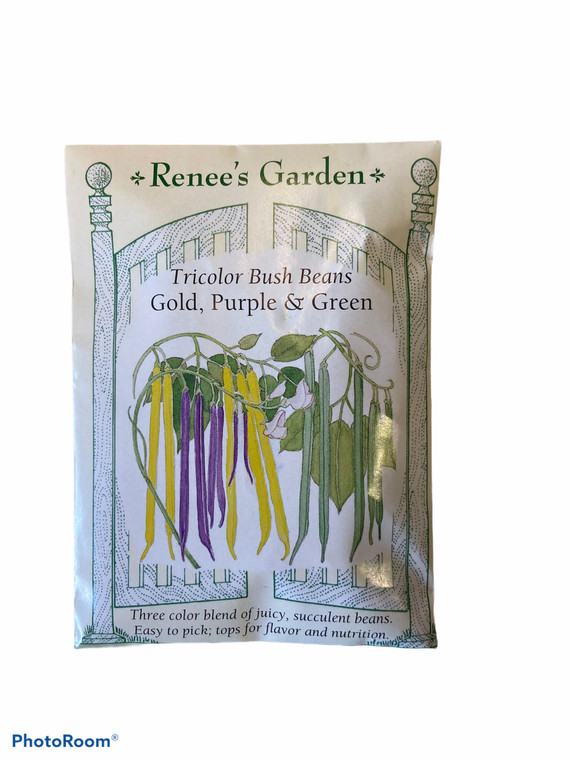 Beans (Bush) - Tricolor; Gold, Green & Purple