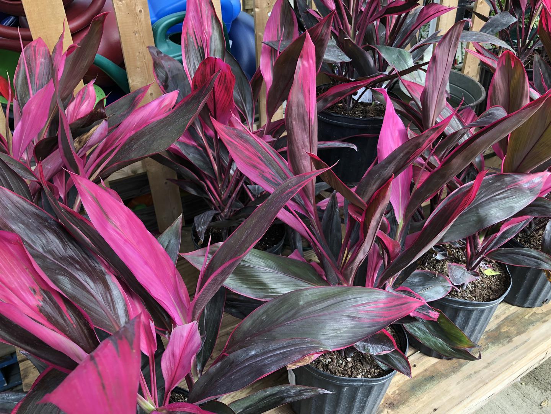 house-plant-6.jpg