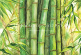 Bamboo Watercolour