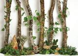 Birch Forest Friends