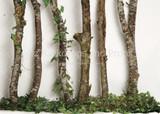 Birch Greenery