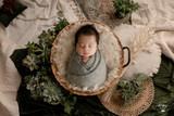 """Divine Succulents Nest"" A Darling Collection Digital Backdrop"