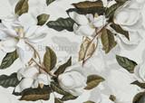 White Magnolia Part One