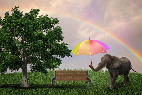 """""""Elephant in the Rain"""" Digital Backdrop"""