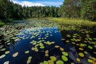 Aquatic Plants' Many Uses In The Environment
