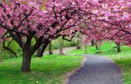 ​Most Loved Flowering Trees