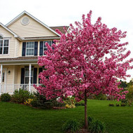 The Advantages Of Landscaping With Blooming Plants