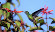 ​Plants That Attract Hummingbirds