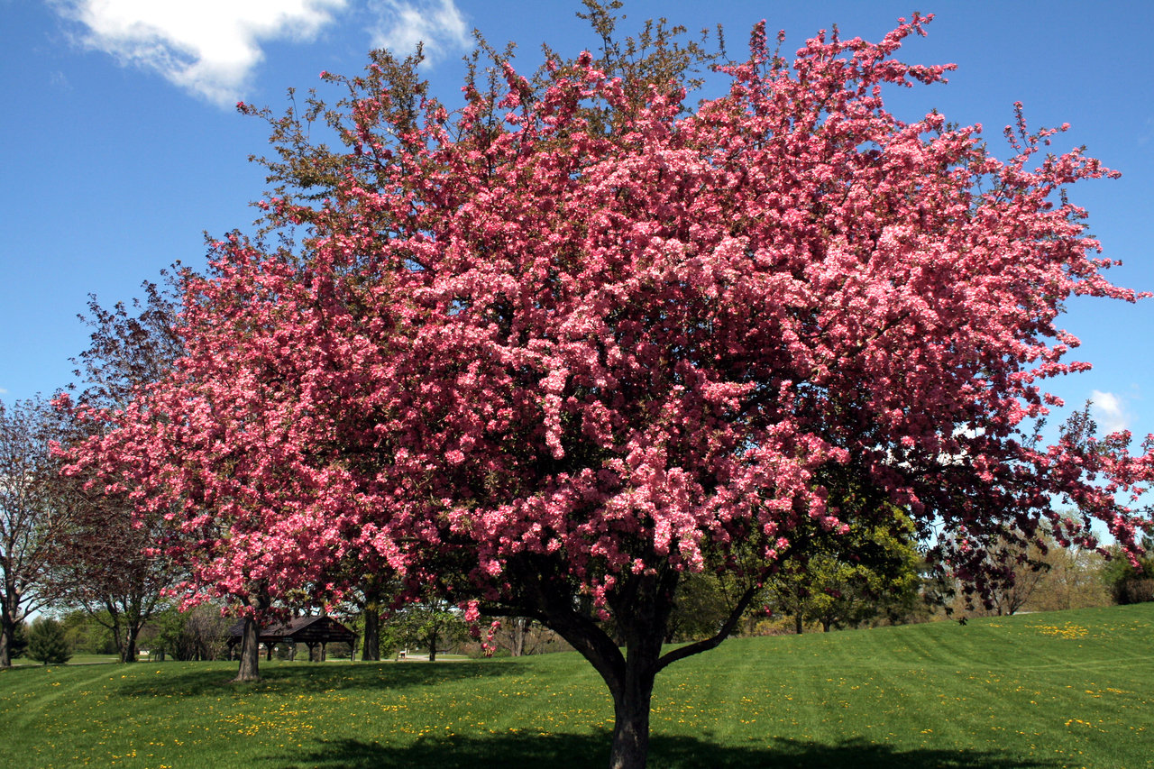 The Most Vibrant Flowering Trees You Can Use For Your Garden