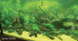 Algea you might encounter and possible treatments
