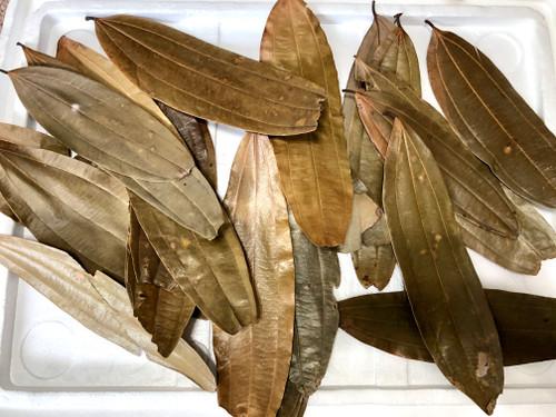 Dried Cinnamon Leaves - XL Size