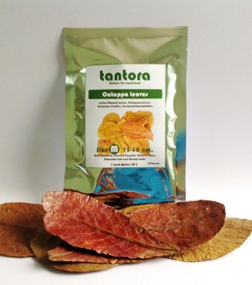Tantora Medium Catappa Leaves