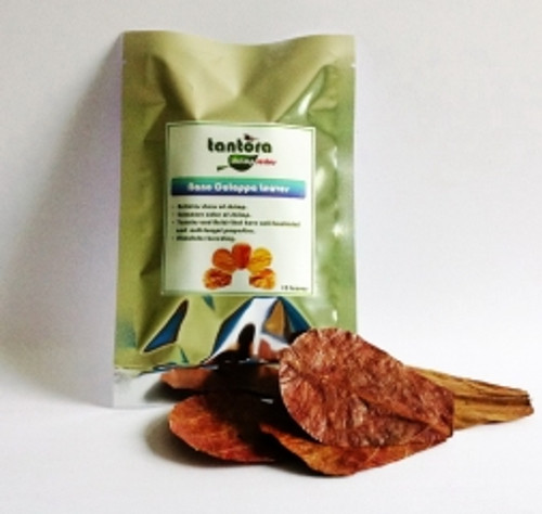 Tantora Nano Catappa Leaves (15 leaves per bag)