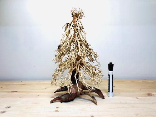 Xmas Bonsai Driftwood Tree for Aquarium Shrimp Planted Tank Aquascape - ANO05