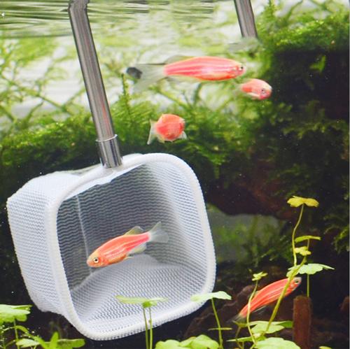 Aquarium Stainless Steel 3D Shrimp Net Extendable Handle