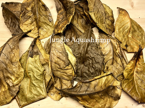 Dried Indian Almond Leaves IAL (Catappa Leaves)