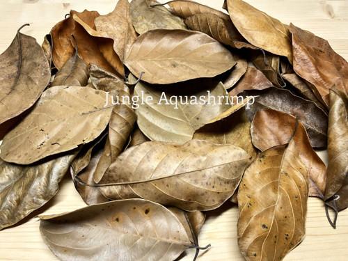 Dried Jackfruit Leaves (Katahal Leaves)